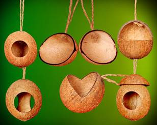 Coconut shell bird feeder
